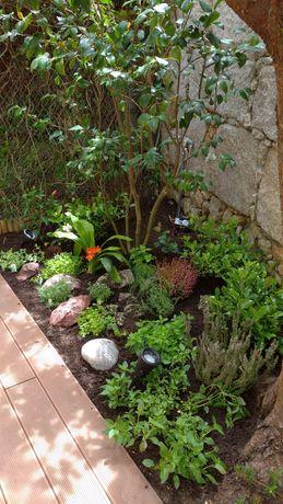 Jardineiro/Construção e manutenção de Jardins e hortas