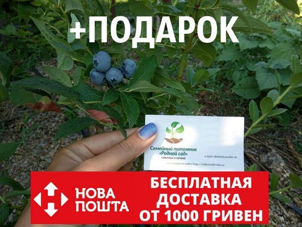 """Голубика """"Спартан"""" семена 20 штук для саженцев насіння лохини+подарок"""