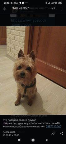 Пропала найдена собака Ул. Запорожская