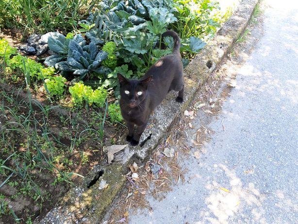 Gato procura um lar