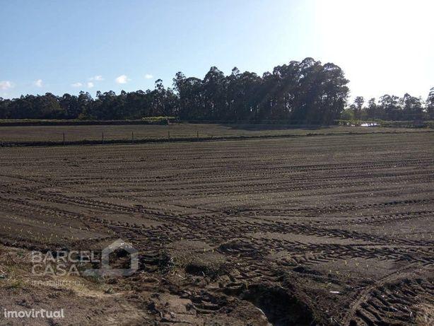 Quinta agrícola em Milhazes - Barcelos