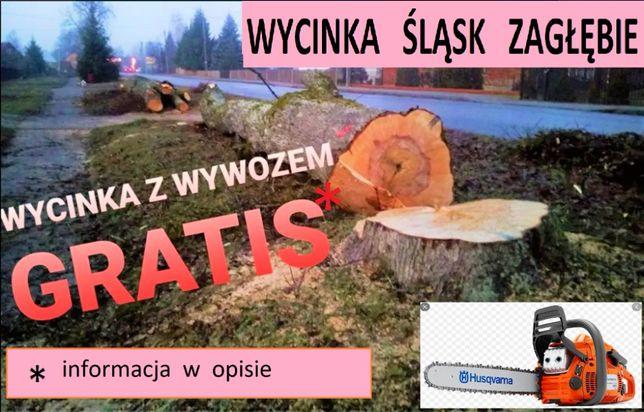 Wycinka Drzew, Przycinka, Porządkowanie terenu. Będzin i okolice.