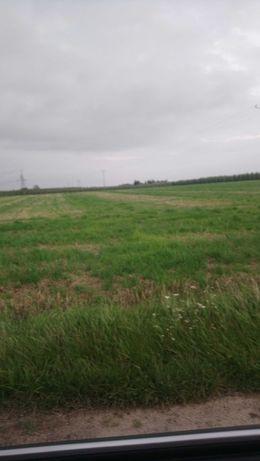 Działka rolna, ziemia rolna Jamno gm.Słubice