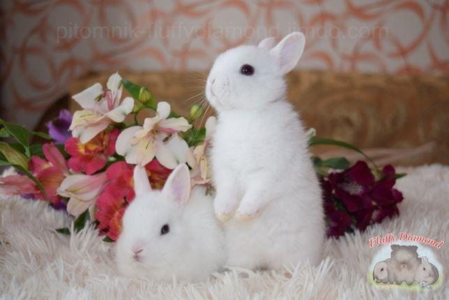 Карликовые крольчата породы Гермелин. Самые маленькие среди кроликов!