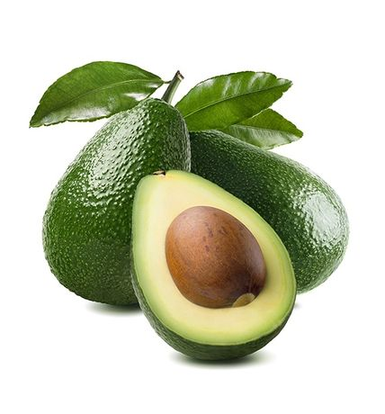 Avocado  drzewko awokado