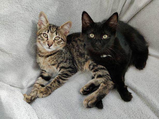 Срочно! Котята мальчик и девочка в хорошие руки
