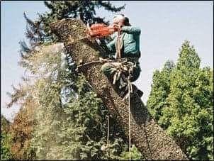 TANIA!!!Wycinka drzew Trudno Dostepnych.DARMOWA WYCENA!!!