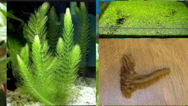 Zielony zestaw do akwarium