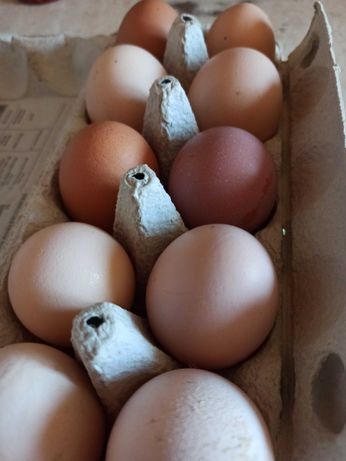 Wiejskie jaja kurze