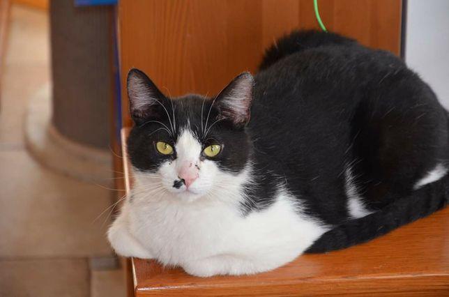 Fajny kotek Felix pragnie domu na stałe