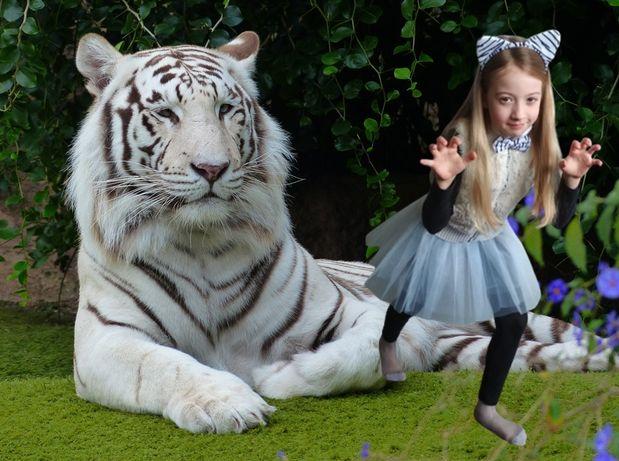 Fato de tigre branco, carnaval