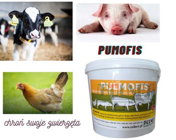 Pulmofis Plus- choroby układu oddechowego bydło,drób,trzoda