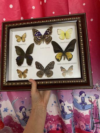 Бабочки в рамке, картина из насекомых засушенных, бабочки сушеные
