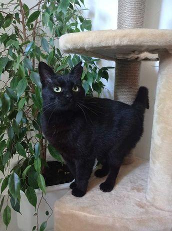 Ласковая черная кошечка хочет домой