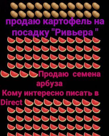 картофель Ревьера и семена арбуза продюсер