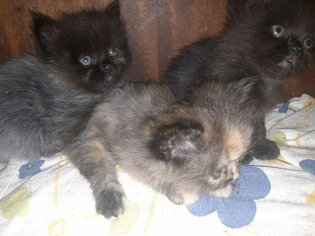 Gatos bebés para adoção