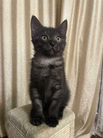 Отдам котенка  в хорошие руки. Возраст 2 месяца .