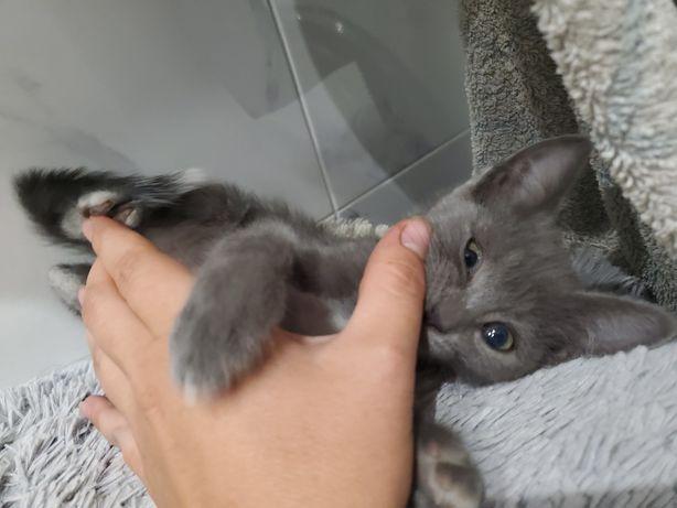 Безплатно девочка котёнок очень нежная