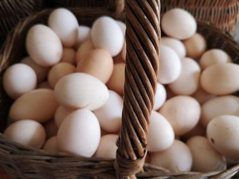 Jaja ekologiczne / jaja wiejskie - Gospodarstwo Ekologiczne