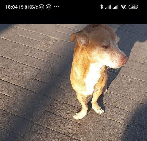 Пропала замечена собака