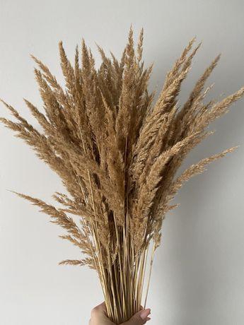 bukiet suszonej trawy naturalnej bukiet susz boho