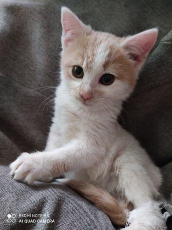 Кошечке холодно хочет в хорошие руки