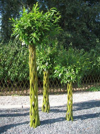 Живая изгородь из ивы,ива,лоза,живые деревья,ивовый прут,черенки