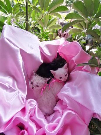Gatos gatinhos bebés para adoção responsável