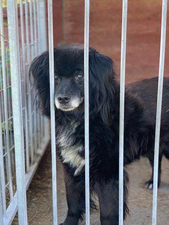 Misiu cudowny psiak o duszy szczeniaka szuka pilnie domu -kto pokocha?