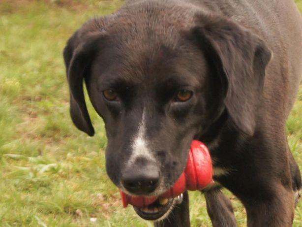 Rupert do adopcji - pies tylko dla wyjątkowych osób