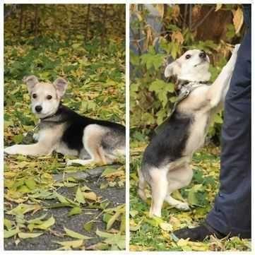 Забавный игривый щенок Лейла, 4 месяца