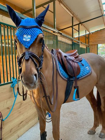Cavalo de Desporto