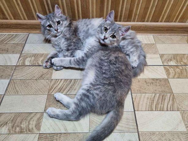 Неймовірно красиві кошенята))