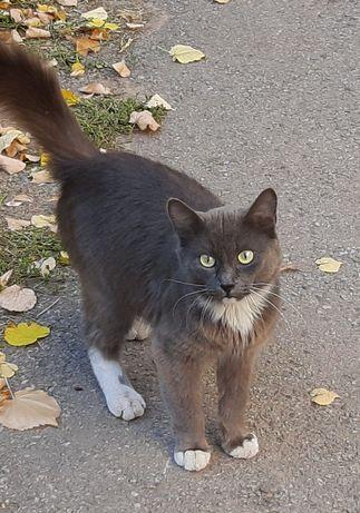 Приблудился котик. Найден кот. Павлово Поле