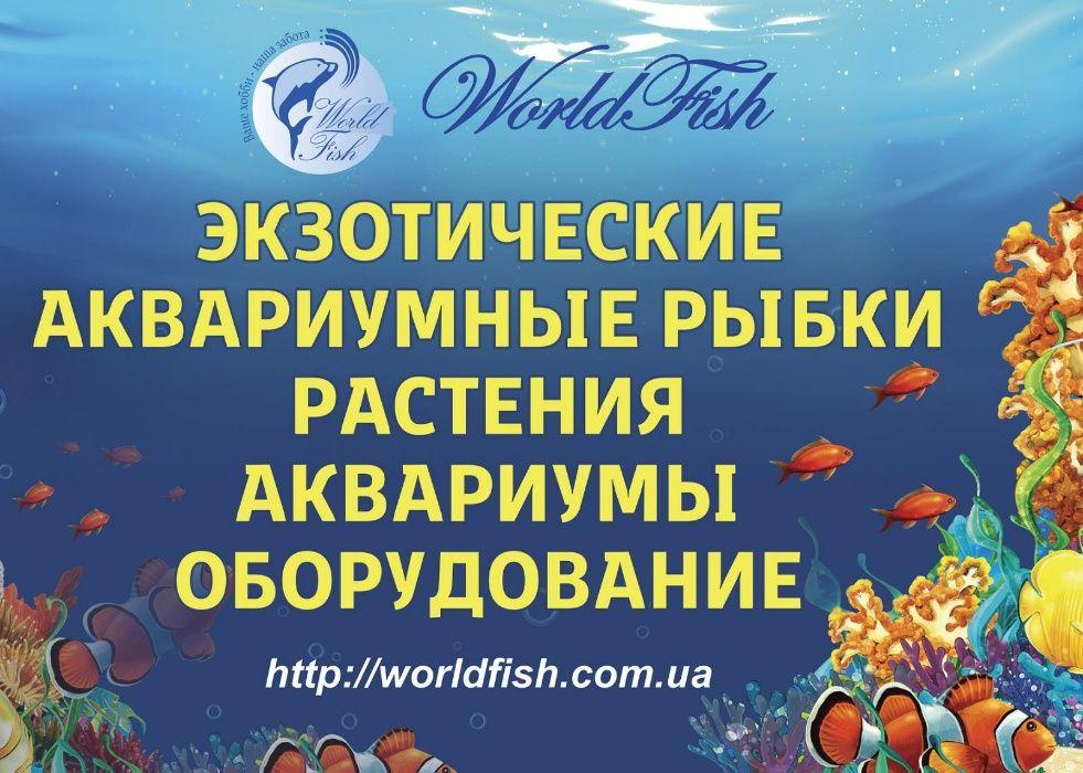 зоомагазин в котором более 50 видов аквариумных рыбок
