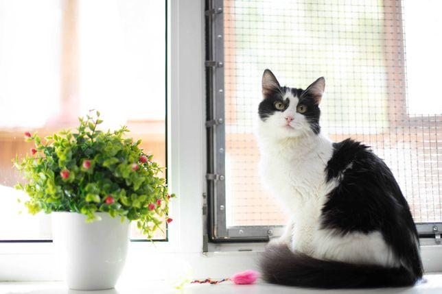 Чудесная ласковая кошечка в добрые руки, кошка, 2,5 года
