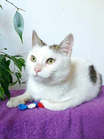 Нежной белой кошечке очень нужен дом