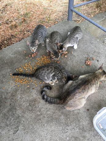Gatos para adoçao
