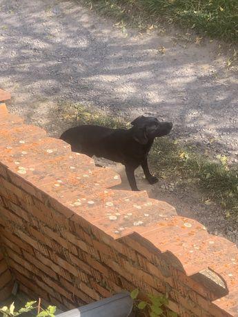 Найдена собака магазин родынний бучмы