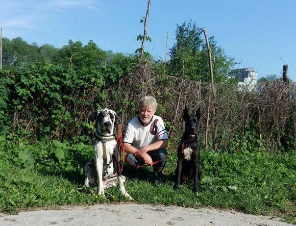 Професійне дресирування собак