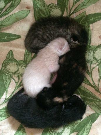 Gatinhos para adotar.