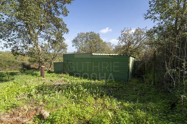 Terreno rústico com armazém licenciado e vinha