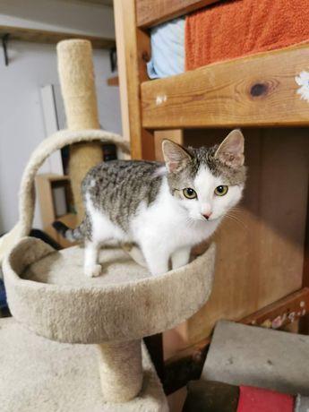 Malutka kotka szuka domu
