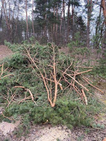 Oddam gałęzie