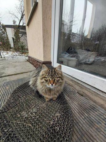 Отдам бесплатно котят (котёнок, кот, кошка) в хорошие руки
