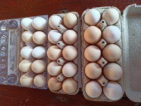 Jajka wiejskie z własnego chowu