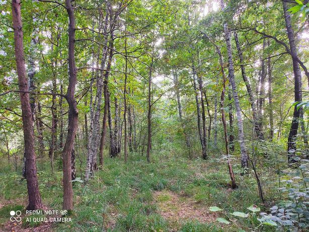 Działka leśno rolna. Zamiana na koparko ładowarkę