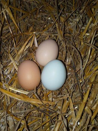 Jajka z własnego chowu