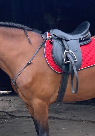 Arreio cavalo 17,5