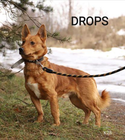 DROPS poleca się do adopcji